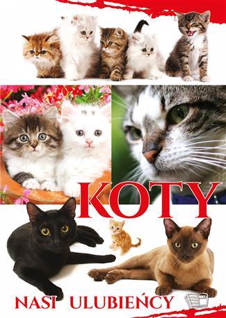 Koty. Nasi Ulubieńcy-237